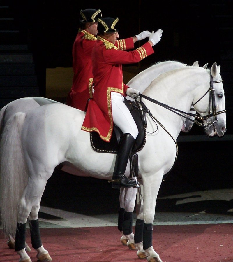 a overview of legendary lipizzaner stallions Legendary white stallions posted on december 8, 2016 december 16, 2016 by pbs hawai'i  this is the story of the world-famous lipizzaner stallions.