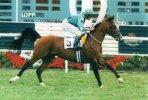 The Original Racehorse � Arabian Horse Racing