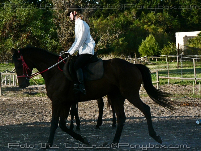 Retraining a Racehorse - Moonfire (Week 3)