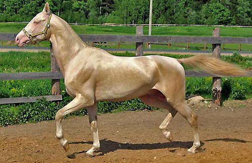Pearl Horse