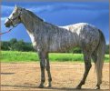 A Horse of a Different Color – Unusual Horse Colors