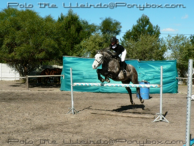 Tempest jumping a 1m upright