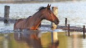 Flash Flooding Disaster in Queensland Australia Kills Thousands of Horses and Livestock