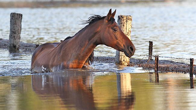 Flash Flooding Disaster in Queensland Australia Kills Thousands of Horses