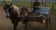 Our Horse Cart Driving Accident