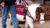 Assistance Animals - The Seeing Eye Horse