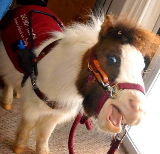 Assistance Animals The Seeing Eye Horse