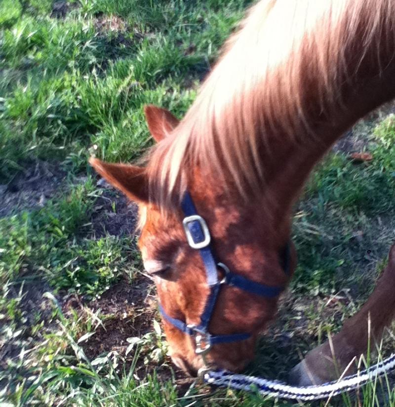 Basics of owning a horse