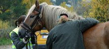 The Lowdown On Buying Horse Insurance