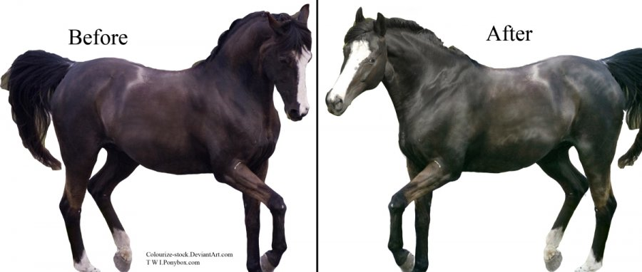 Combining Two Horses In Photoshop Elements
