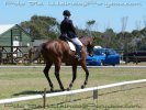 Retraining a Racehorse – First Dressage Show