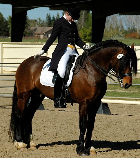 Perfect Dressage Test