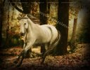 From White to Black - Darkening Equine Legs in Photoshop