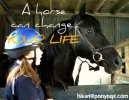 How Horses Changed My Life - Part I