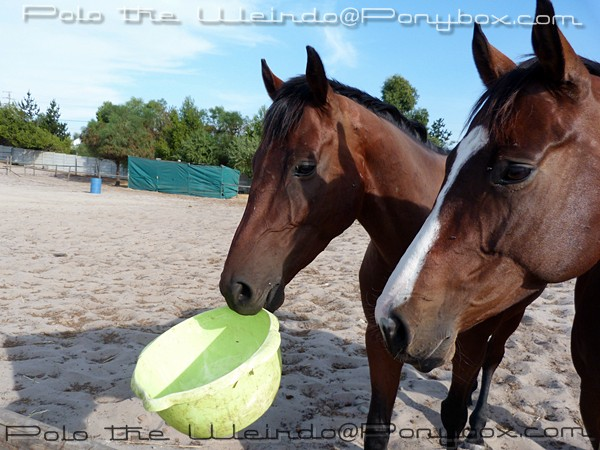 Life Lessons Learned From Horses