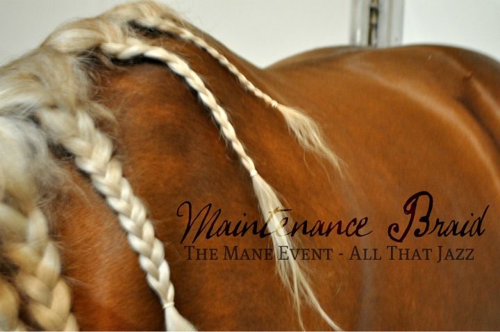 Horse Maintenance Braid