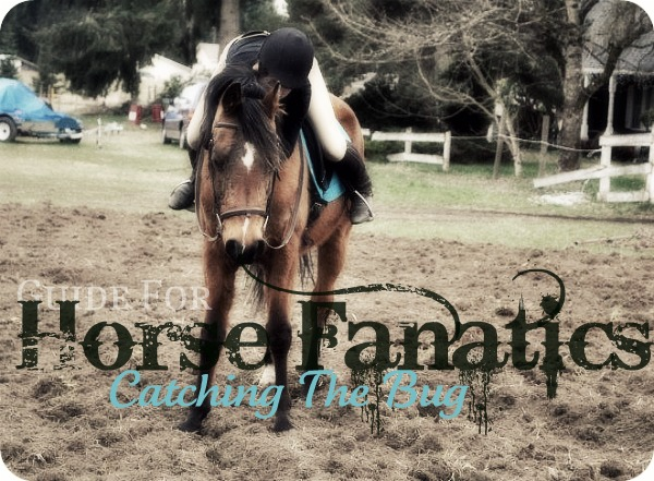 Ponybox Guide For Horse Fanatics