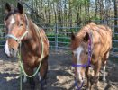 The Great Debate: Rope Halters vs Flat Halters Part 2