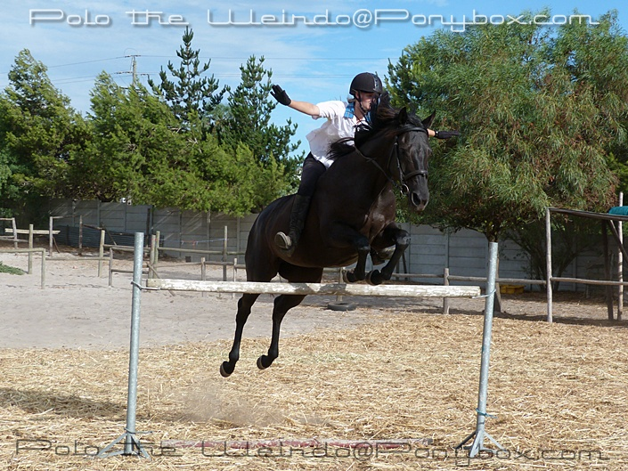 Horse Jumping Without Reigns