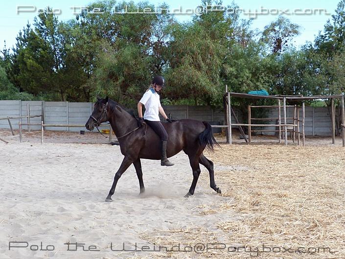 ride horse tackless