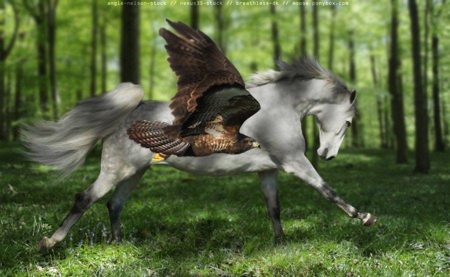 اسب بال دار