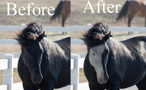How to Give a Black Horse White Facial Markings