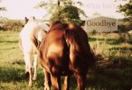 This is not Goodbye - A Story of Horses Lost