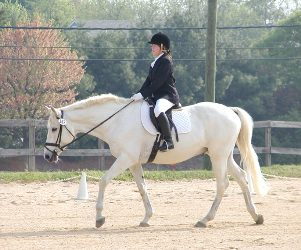 The Basics of Dressage and Assessing Your Riding Level