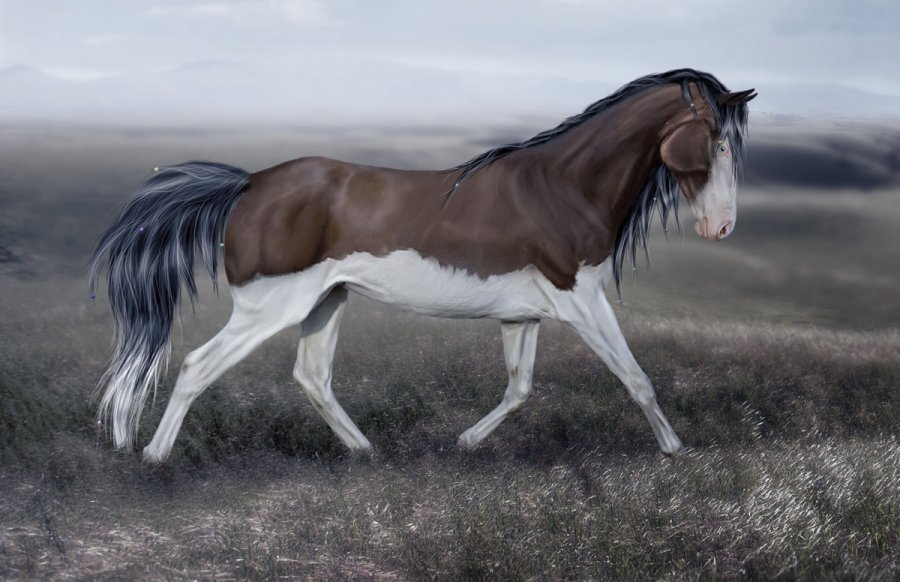 how to draw horse mane