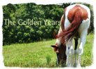 The Golden Years - Caring For An Older Horse