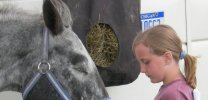 Appaloosa Horse Breed Photos