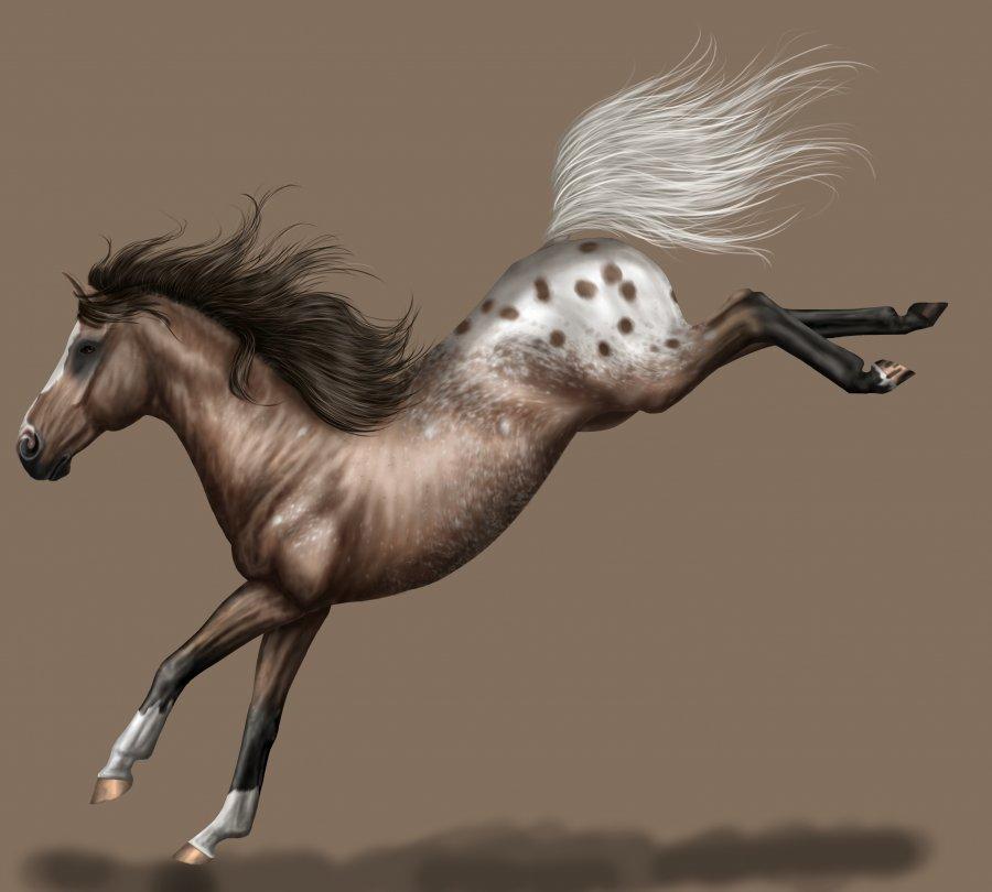 Rare Horse Breeds Appaloosa Horse Breed Photo