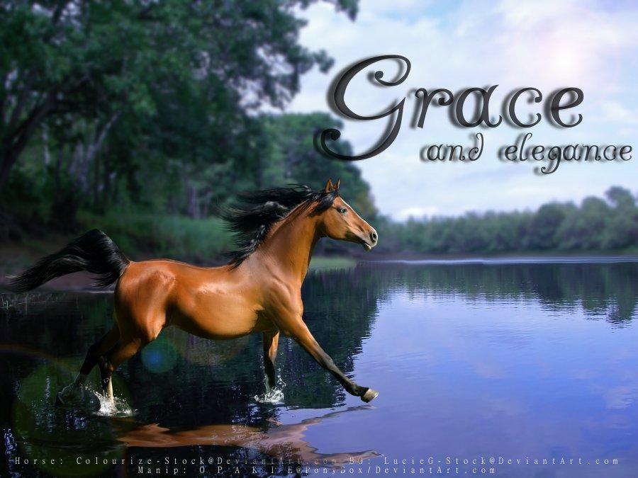 Rare Horse Breeds Arabian Horse Breed Photo