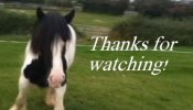 Horse Video of Paddy After Some Training
