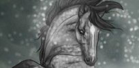 Ponybox Featured Horse Graphics