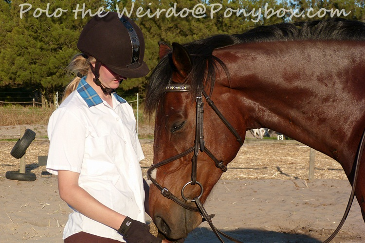 Your Horse - Partner or Problem