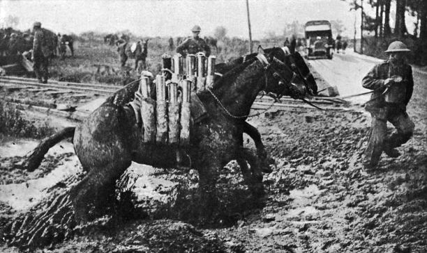 Four Kiwi Horses Return From The Great War