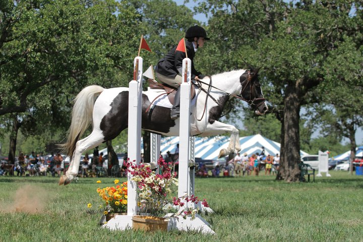 Making A Plan To Your Equestrian Dream
