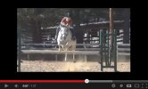 Working With A Sensitive Horse [Video]