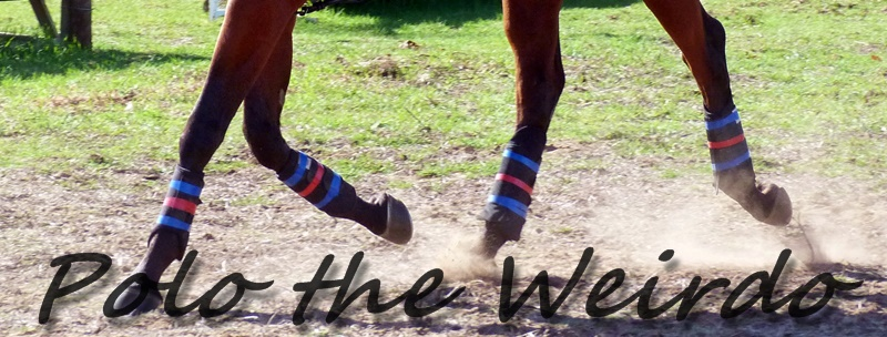 Crocs For Horses - Know What Equine Legwear Your Horse Needs