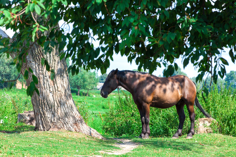 How Old Is The Oldest Horse You Know