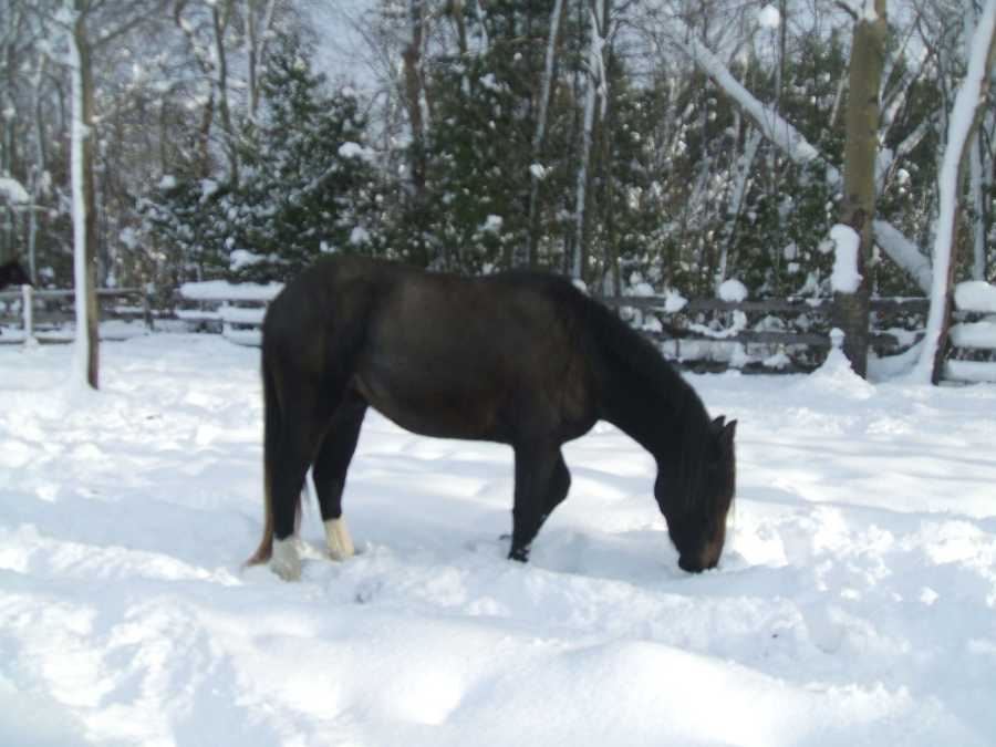 The Story of My Horse Trillium