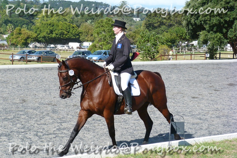 How to Ride a Dressage Test