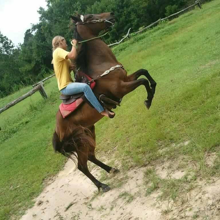 Mustang Horse Breed Photos