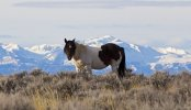 Where To Find The Last Of The Wild Horses