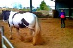 Lunging A Horse With A Pessoa