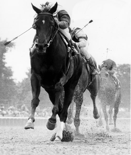 Ruffian A Race Day Tragedy