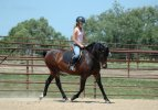 Tips For Sitting the Trot