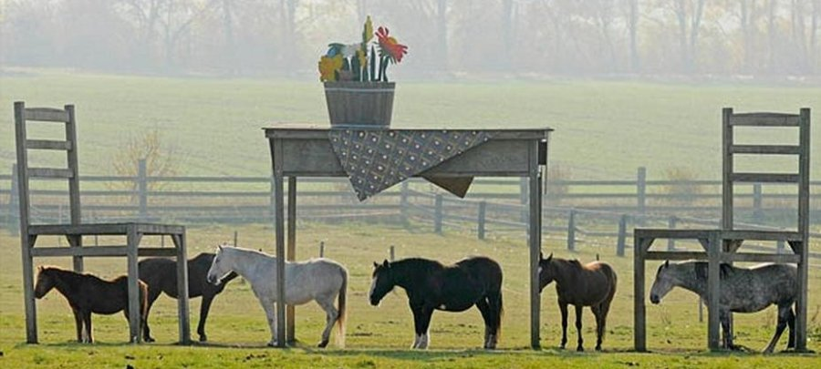 Horse Table Shelter