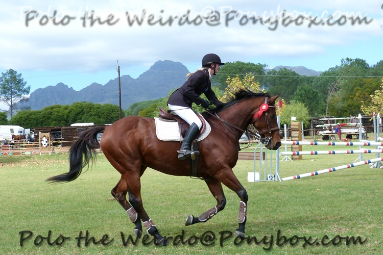 Why I Regret Giving my Eventer a Holiday